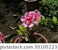 ดอกไม้,ฤดูใบไม้ผลิ 30105223