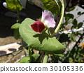花朵 花 花卉 30105336