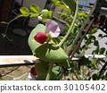 花朵 花 花卉 30105402