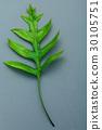 Beautiful shape of fern leaves flat lay on gray . 30105751