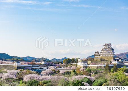 Himeji Castle Cherry blue sky 30107930