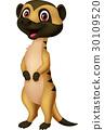 Cute meerkat cartoon 30109520