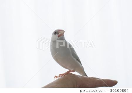 Pastel Silver Stone Bird 30109894