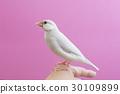 พาสเทล Silver Stone Bird 30109899