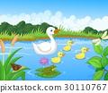 Duck family cartoon swimming 30110767