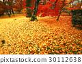 eikando, maple, yellow 30112638