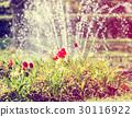 Beautiful tulips and fountain, retro photo filter 30116922