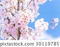 樱花·盛开 30119785