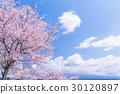 櫻花·盛開 30120897