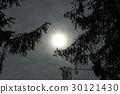 Night sky in the forest 30121430