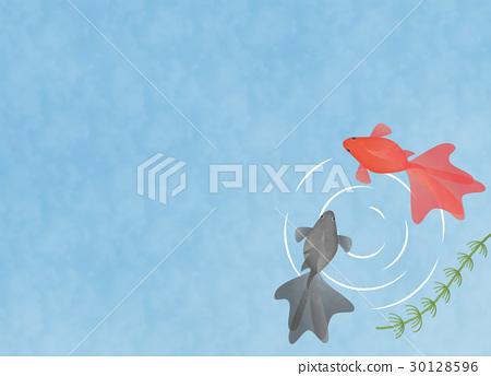 水中的兩個金魚插圖插圖素材複製空間夏季/季節材料/日本材料 30128596