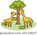 長頸鹿 矢量 全身 30128607
