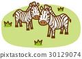 zebra, zebras, vector 30129074