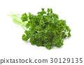 야채, 채소, 향채 30129135
