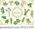 Illustration set of various herbs 30131144
