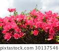 ดอกไม้,ฤดูใบไม้ผลิ,ท้องฟ้าเป็นสีฟ้า 30137546