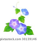 morning, glory, bloom 30139146