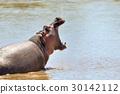 Hippo family 30142112