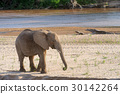 Elephant 30142264