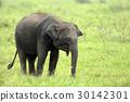Elephants 30142301