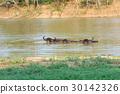 威嚇 動物 野生生物 30142326