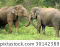 Elephants 30142389