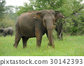 Elephants 30142393