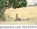 Cheetah 30142974