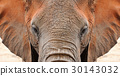 Elephant 30143032