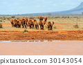 Elephant in National park of Kenya 30143054
