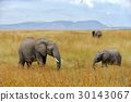 elephant, animal, nature 30143067