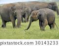 Elephants 30143233