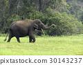Elephants 30143237