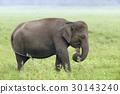 Elephants 30143240