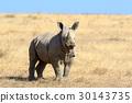 animal, rhino, rhinoceros 30143735