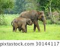 Elephants 30144117