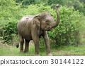 Elephants 30144122