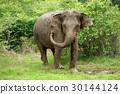 Elephants 30144124