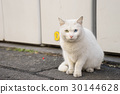 眼睛颜色不匹配 流浪猫 猫 30144628
