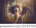 elephants in Chitwan 30144709