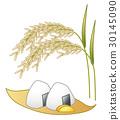 rice, ball, paddy 30145090