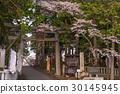 世界遺產 世界文化遺產 淺間神社 30145945