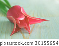 tulip flower greeting template background 30155954