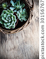 Green house plants potted, succulents in a basket 30156767