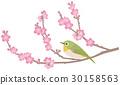 동박새와 매화 일본식 30158563