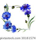 Wildflower carnation flower frame in a watercolor 30161574