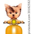 狗 狗狗 可爱的 30162562