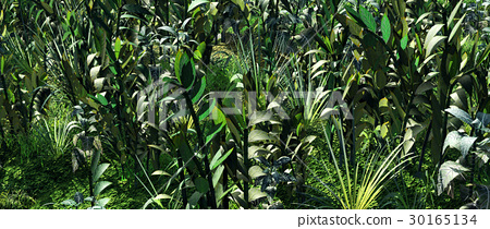Plants in the wilderness 30165134