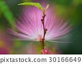 植物 花 花卉 30166649
