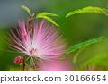 植物 花 花卉 30166654